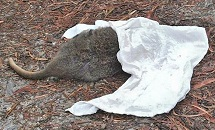 Photo of injured wildlife