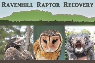 Ravenhill Raptor Recovery banner